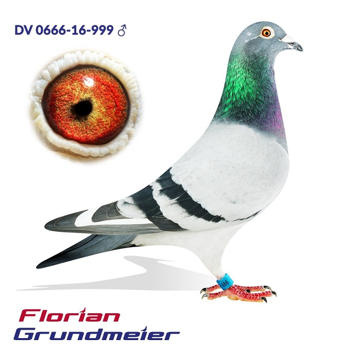 DV0666-16-999