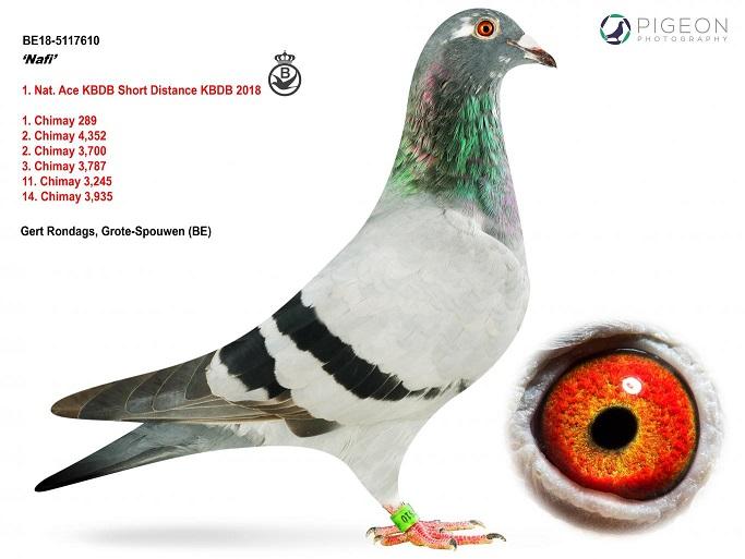 8B18-5117610-Nafi-Kopie-2
