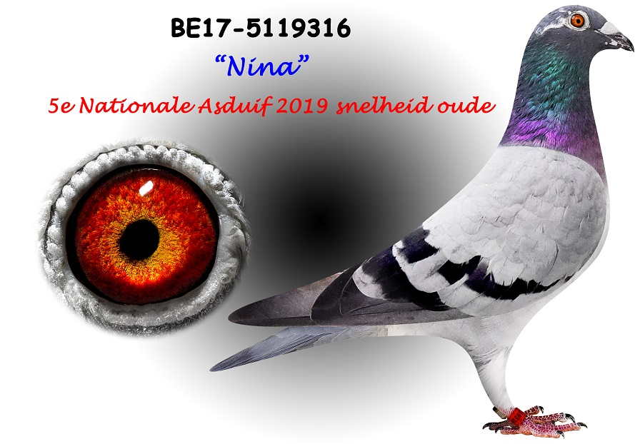 BE17-5119316-NINA-Kopie
