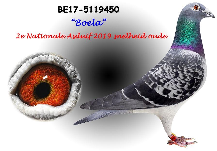BE17-5119450-BOELA-Kopie