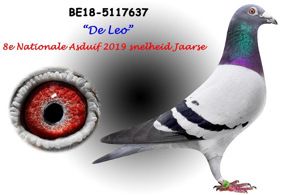 BE18-5117637-LEO-Kopie