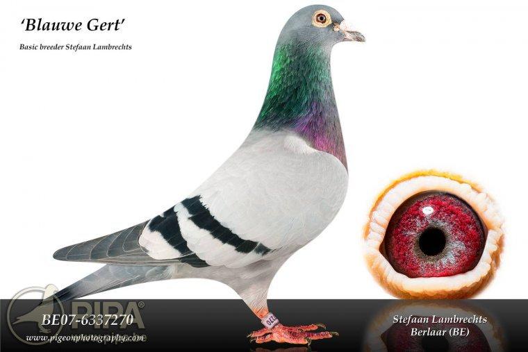 B07-6337270-Blauwe-Gert-Kopie